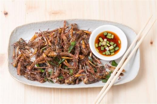 다가올 식량위기에 대비해 육류 등을 대체할 수 있는 식품으로 식용 곤충이 각광받고 있다 출처 123rf.com