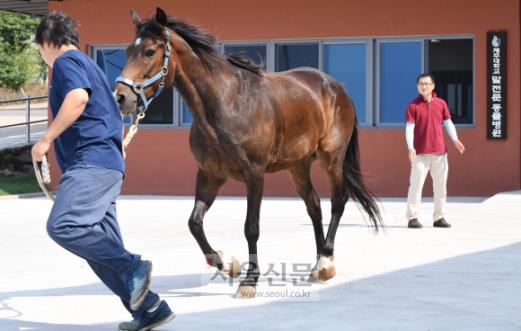 말전문동물병원 송민근 수의사가 말과 함께 뛰며 걸음걸이를 통해 부상 부위를 확인하는 파행검사를 하고 있다.
