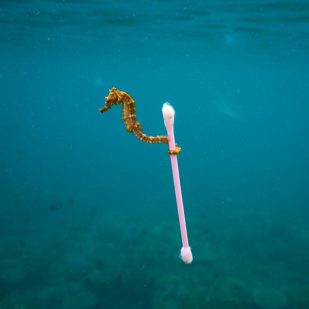 쓰레기 서퍼 (Sewage surfer)