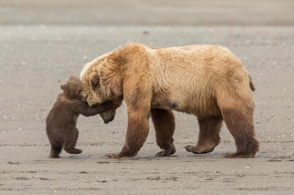 곰의 포옹 (Bear hug)