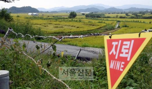 지뢰 위험 표지판 너머에 있는 강원 철원평야에서 지난 7일 벼가 한창 익어가고 있다. 6·25전쟁이 끝난 지 64년이 됐지만 접경지역의 고통은 현재 진행형이다. 철원·고성 강성남 선임기자 snk@seoul.co.kr