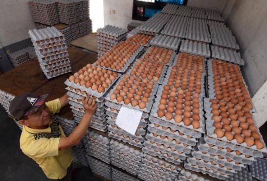 도매업체엔 달걀 쌓이고…  14일 경기 수원의 한 달걀 도매업체에서 상인이 키보다 높이 쌓인 달걀판을 정리하고 있다. 박지환 기자 popocar@seoul.co.kr