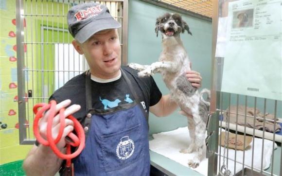 마크 임호프가 최근 노령견 입양단체 수지스 시니어 도그스에서 보호 중인 한 유기견을 목욕시키고 있다. 출처 수지스 시니어 도그스(Susie's Senior Dogs)