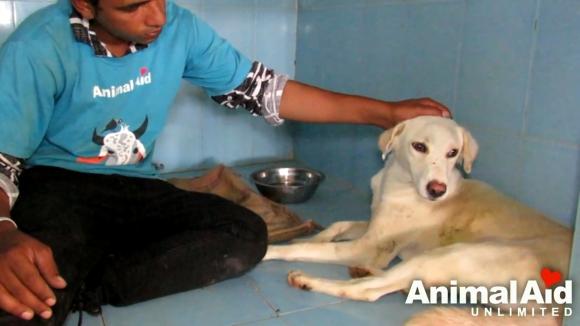 유튜브 영상 캡처, Animal Aid Unlimited, India.