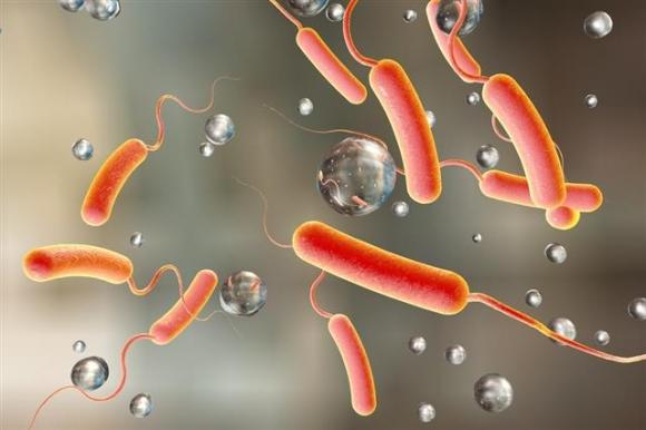 그림 속 콜레라균을 비롯해 황열병, 디프테리아처럼 지금은 찾아 보기 힘든 전염병들이 올해 다시 확산될 수 있다는 우려가 점점 커지고 있다. 미국 질병관리통제센터(CDC) 제공