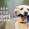 """[카드뉴스] """"강아지 목줄 채우셨나요?""""…누군가 당신의 반려견을 지켜본다"""