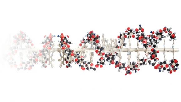 국내 연구진이 포함된 국제공동연구팀이 빅데이터 기술과 유전자 가위기술을 이용해 자폐증을 유발시키는 유전자를 찾아냈다.