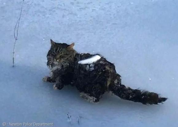 뉴턴 소방서가 연못에서 구조한 길고양이.