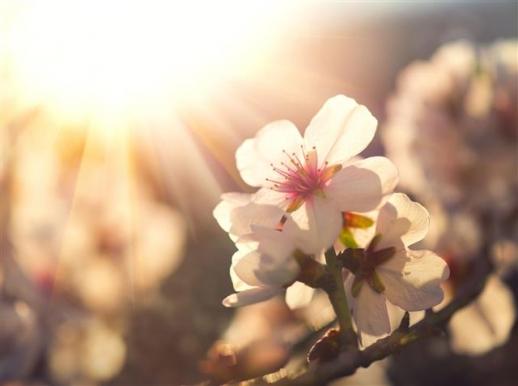 아름다운 꽃식물의 기원이 기존 예상보다 더 이른 약 2억 5600만~1억 4900만년 전이라는 연구결과가 나왔다. 출처 123rf