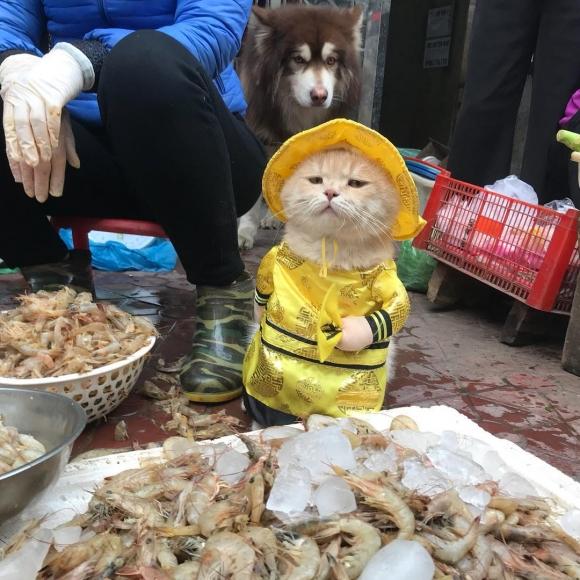 베트남 북부 항구도시 하이퐁의 한 재래시장에서 유명한 고양이 '쪼'  인스타그램(@dog1501)