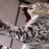 동물권단체 케어, 고양이 삼단봉 살해 보안업체 직원 고발
