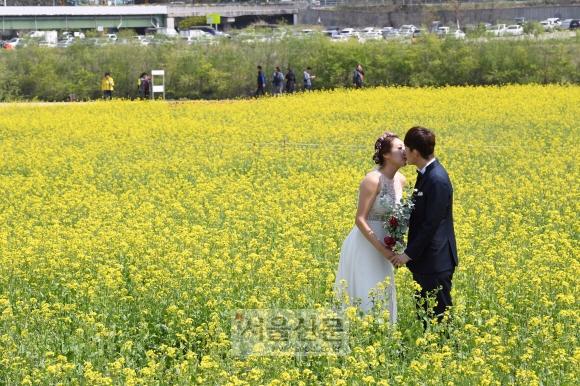 결혼 시즌을 맞아 대구 북구 노곡동 하중도 유채꽃단지에서 신혼부부가 웨딩 촬영을 하고 있다.