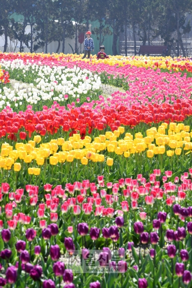 전남 신안군 임자면 대광해수욕장길에서 열린 신안 튤립축제장을 찾은 어린이들이 꽃을 감상하고 있다.