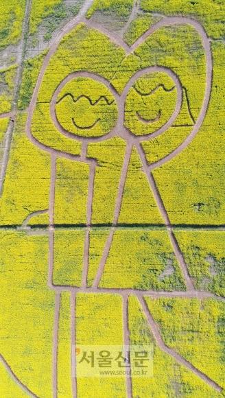 부산 강서구 대저생태공원 유채꽃밭에 단란한 가족들의 문양이 새겨져 있다.