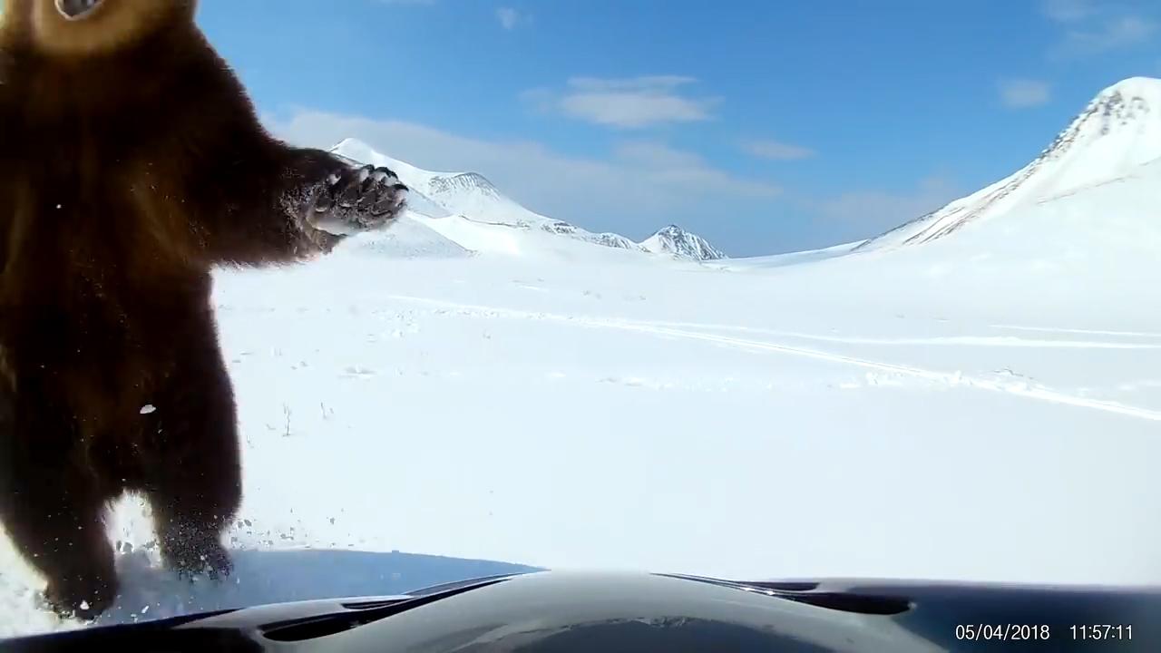 유튜브 영상 캡처. ViralHog.