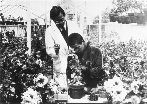 한국농업과학연구소장으로 재직하던 당시 피튜니아 교배를 가르치고 있는 우장춘 박사. 서울신문 DB