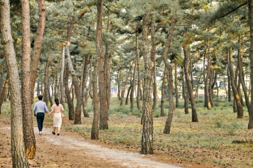 강문해변과 송정해변 뒤편의 솔숲을 산책하는 사람들. 푸르른 바다를 곁에 두고 걷는 솔숲에 초여름의 싱그러운 향이 퍼진다.