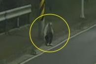 길 잃고 고향 찾아간 치매 노인 발견한 CCTV요원