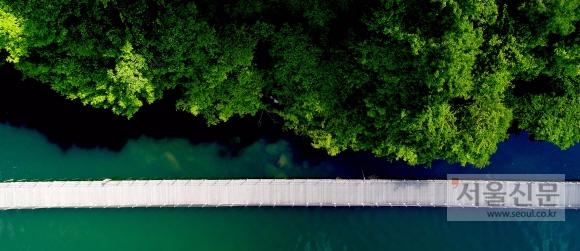 강원 화천군 북한강에 '숲으로 다리'라 이름 붙은 부교가 놓여 있다. 소설가 김훈씨가 이름을 붙인 다리로 '숲으로 들어간다'는 뜻을 지니고 있다.