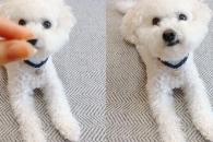 [개스타그램] 강아지에게 인내심 테스트를 해봤다