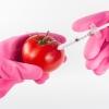 유전자 변형식품, 희망인가 악몽인가…또 불거진 안전성 논란