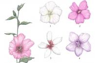 [이소영의 도시식물 탐색] 나라꽃 무궁화를 그린다는 것