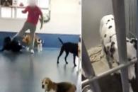 '사랑을 발길질로' 동물학대하는 英 개보호센터 직원들