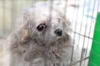 [특별한 동행] 불법 번식장 화재 현장에서 구조된 강아지들
