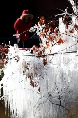 대관령에 솟아난 얼음나무