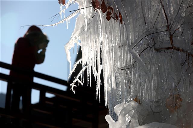 추위가 빚어낸 얼음조각
