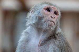 """미국, 러 '백신 협력' 제안 거절…""""원숭이에도 접종 안해"""""""