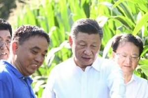 시진핑이 옥수수 밭으로 달려간 사연