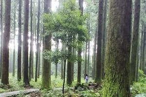 여름휴가 제주 한남숲에서 '힐링'