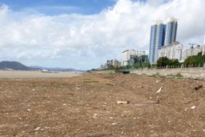 영산강서 내려온 거대한 '쓰레기 섬'…목포 앞바다 점령
