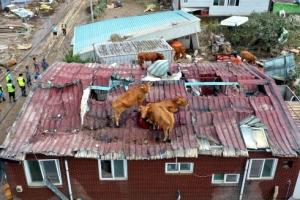 역대급 물난리에… 태풍까지 한반도 덮친다