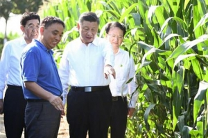 곰팡이 옥수수에 흔들리는 14억 '밥그릇 안보'