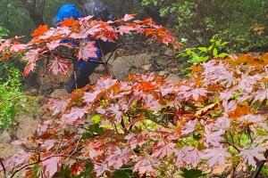 '붉게 물드는 가을' 설악산 단풍