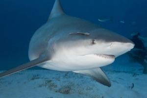 미 플로리다서 남편이 상어에 다치자 임신한 아내 뛰어들어 구해