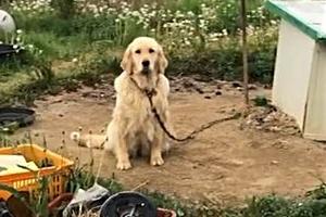 '견생역전' 다니엘의 줄리엣 된 개농장 리트리버