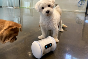 '유기동물과 놀아주는'  AI로봇