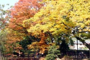 알록달록 깊어가는 가을