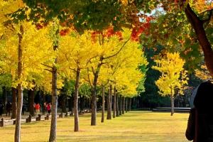 가을 속 남이섬