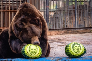 '곰의 점괘 맞을까' 바이든 선택한 러시아 동물원의 곰