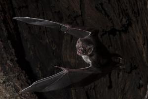 흡혈박쥐도 아프면 사회적 거리두기 한다