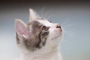 고양이 국내 첫 코로나 확진…개도 의심사례 보고(종합)