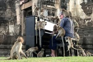 태국서 원숭이들 위해 연주하는 영국 피아니스트 폴 바튼