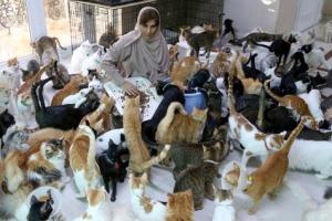 '니집이 내집'… 고양이·개 492마리 기르는 오만 여성