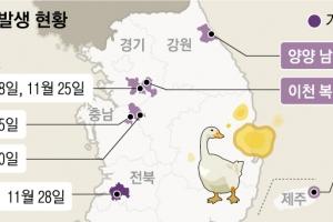 2년 8개월 만에 오리농장 AI… 전국 확산 조짐에 '심각' 경보