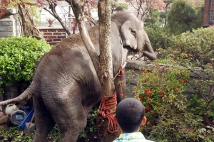 원숭이가 수박밭에서 음주를?…자유를 꿈꿨던 동물들의 동물원 탈출…