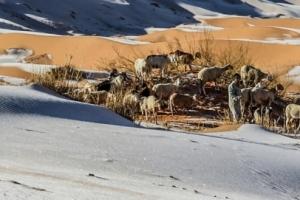 """""""사하라 사막에 쌓인 눈""""…세계 곳곳에서 이상기후"""